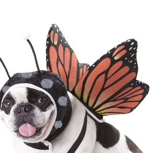 Pet butterfly wings costume small